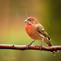 .:Standing in the Rain:. by RHCheng