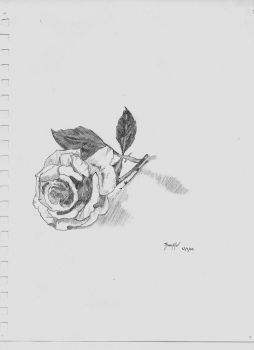 Rose Still Life by TheArtistThomas
