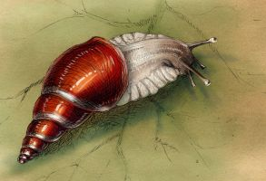 Stinging snail by hontor