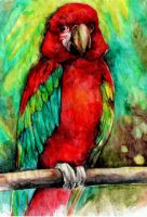 Parrot by A-anarchia