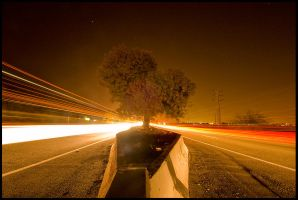 Highway Tree - long exposure3 by sevenths
