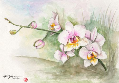 orchid 4 by rchaem