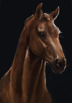 Horse Portrait study by CrazyHorseXD