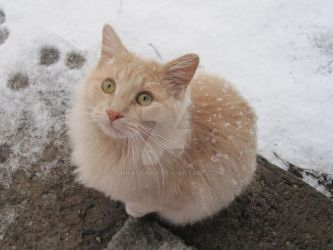Abominable Snow Cat by annaleahy