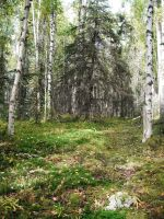 Forest 3 by prints-of-stock