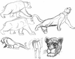 Quickdrawings lions bear by FloreindeiN