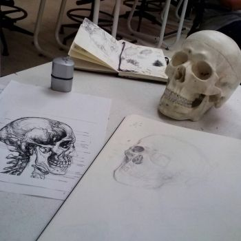 IG - Skull Studies by Ahkward