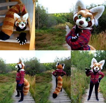 Red Panda Fursuit (for sale!) by SilentRavyn