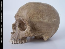 freaksmg-stock - new skull 10 by freaksmg-stock