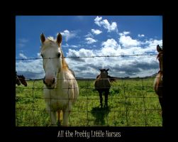All the Pretty Little Horses by diamondscan