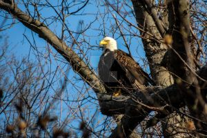 Project 365 - 082 - Proud American by jguy1964