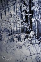 -123- Winter bush by MiriamPeuser