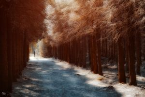 the thin ice of the new day... by ildiko-neer