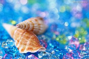 Shell - Summer Memory - by WindyLife