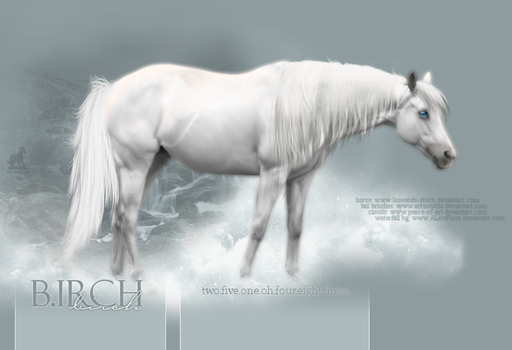 Birch entry 2 by Pure-blue