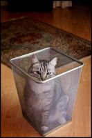 simply a cat in a paper bin by wandi-Camarell
