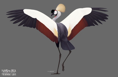 Grey crowned crane by namu-the-orca