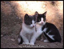 382 by evy-and-cats