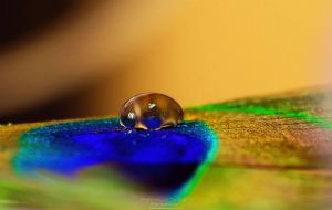 78. Waterdrop on a feather by FrancescaDelfino