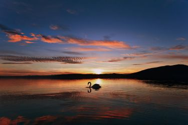 Swan on sunset lake by NickKoutoulas