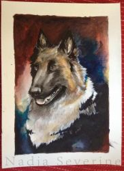 Portrait of a belgian shephard by nadjasimon