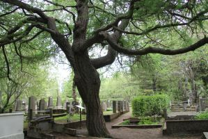 The crooked tree by Darkedraveness