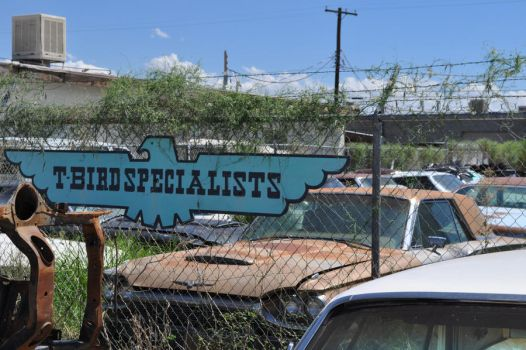T Bird Specialists by we-are-the-remnants