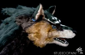 Wolf Link Head by studioofmm