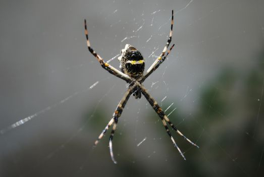 just a spider by mortykus