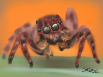 Spider by DebyBee
