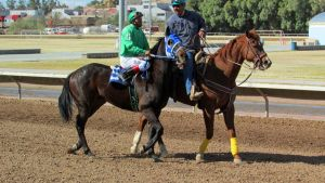 Racehorse Stock 55 by Rejects-Stock