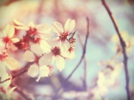 Welcome spring.1 by LinaLoPhoto