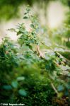 A lizard in the bush by Togusa208