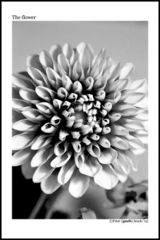 The flower by gmtb