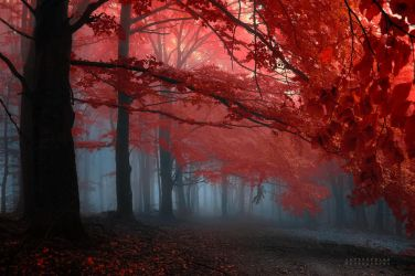 -Melody of my heart- by Janek-Sedlar
