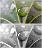 Leaf Waterdrops by JenniBeeMine