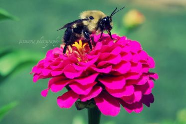 a way to a bees heart. by jenmarie123