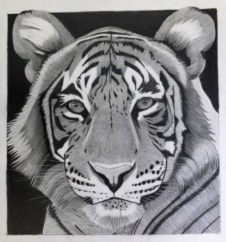 Tiger in Black and White by professorwagstaff