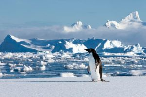 Penguin by AlterEgoPhotography