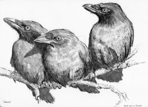 Three Young Ravens by MarkRHansen