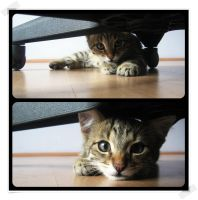 What are you doin'? by 00BlacKBerrY00