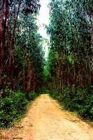 Heavenly Path ... by Tigles1Artistry