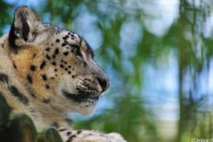 Leopard by LOmbre24