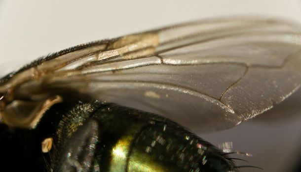 A fly...up close 11 by Egg-Salad