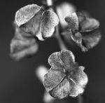 Flowers are beautiful IN BW by Viand