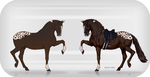 Liver Chestnut Appy Auction [OPEN] by TheAdoptArtist