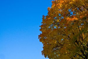 Colours of Autumn by mark1624
