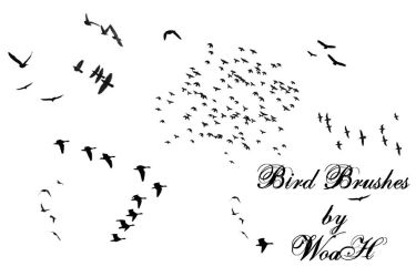 Flying Bird Brushes by WingsOfAHero