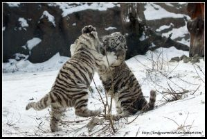 Snow fight by AF--Photography