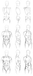 Basic Male Torso Tutorial by timflanagan